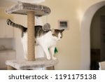 Stock photo the cat climbed onto the tower for cats a blurred background 1191175138