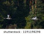08.09.2018. family of common... | Shutterstock . vector #1191198298