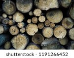 felled trees in a forest close... | Shutterstock . vector #1191266452