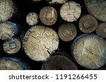 felled trees in a forest close... | Shutterstock . vector #1191266455