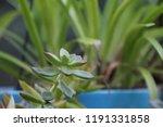 succulent plants in patio... | Shutterstock . vector #1191331858