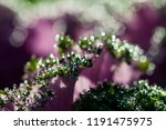 green and pink natural... | Shutterstock . vector #1191475975