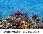 coral reef in egypt with color... | Shutterstock . vector #1191532015