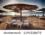 beach in the egypt as very nice ... | Shutterstock . vector #1191538675