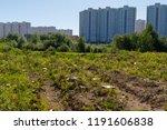 nest habitat of little ringed... | Shutterstock . vector #1191606838