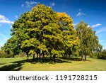amazing nature and fall concept.... | Shutterstock . vector #1191728215