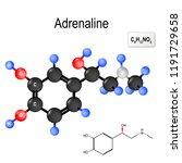 adrenaline  epinephrine  is  a...   Shutterstock . vector #1191729658