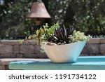 succulent container garden in... | Shutterstock . vector #1191734122