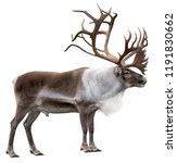 reindeer with huge antlers ...   Shutterstock . vector #1191830662