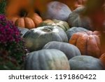 Pumpkins. Autumn Festival In...