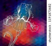 beautiful iris flowers. iris... | Shutterstock .eps vector #1191873682