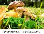 cep mushroom growing in autumn...   Shutterstock . vector #1191878248