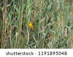 A Small Yellow And Orange Cape...
