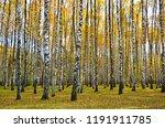 beautiful autumn landscape ... | Shutterstock . vector #1191911785