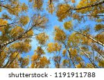 beautiful autumn landscape ... | Shutterstock . vector #1191911788