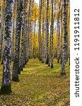 beautiful autumn landscape ... | Shutterstock . vector #1191911812