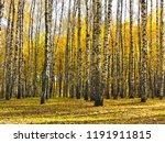 beautiful autumn landscape ... | Shutterstock . vector #1191911815