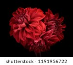 Flowers Red Dahlia  Buds Close...