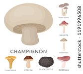 poisonous and edible mushroom... | Shutterstock .eps vector #1191996508