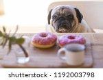 Sad Funny Expression Pug Dog...
