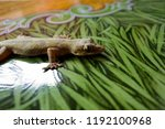 lizard in the house on the wall | Shutterstock . vector #1192100968