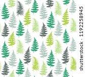 fern frond herbs  tropical... | Shutterstock .eps vector #1192258945