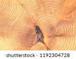 annual ring of old tree texture ... | Shutterstock . vector #1192304728