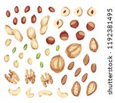 nut mix. set with nuts. walnut  ... | Shutterstock .eps vector #1192381495
