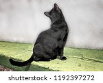 black bombay cat  back to the... | Shutterstock . vector #1192397272