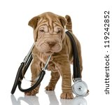 Stock photo shrpei puppy dog with a stethoscope on his neck isolated on white background 119242852
