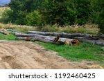 felling of the living beech... | Shutterstock . vector #1192460425