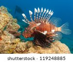 lionfish with the silhouette of ... | Shutterstock . vector #119248885