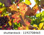 autumn and grape harvest  red... | Shutterstock . vector #1192708465