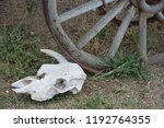 Old Wagon Wheel And Skull