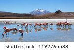 Flamingos in Laguna Hedionda located near the Uyuni Salt Flat (Salar de Uyuni) in Bolivia, South America