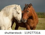 A Pair Of Horses Showing...