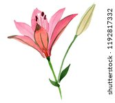 watercolor red lily flower.... | Shutterstock . vector #1192817332