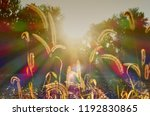 sunrays with chromatic... | Shutterstock . vector #1192830865