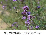 bee honey in the flying insects   Shutterstock . vector #1192874392