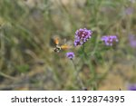 bee honey in the flying insects   Shutterstock . vector #1192874395
