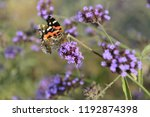 the butterfly in outdoor   Shutterstock . vector #1192874398