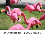 Flock Of Pink Plastic Flamingos ...