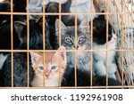 Stock photo many kittens in a cage adorable small sad kittens sitting in a cat carrier or crate waiting to be 1192961908