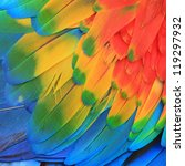 abstract of wing bird color... | Shutterstock . vector #119297932