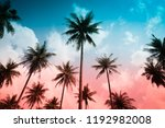 coconut palm trees in sunny day ...   Shutterstock . vector #1192982008