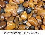 modern style close up wet round ...   Shutterstock . vector #1192987522