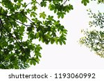 golden green leaves and... | Shutterstock . vector #1193060992