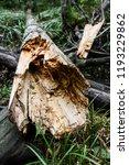 storm damage and broken tree in ...   Shutterstock . vector #1193229862