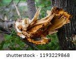 storm damage and broken tree in ...   Shutterstock . vector #1193229868