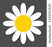 chamomile flat vector icon on a ... | Shutterstock .eps vector #1193251525